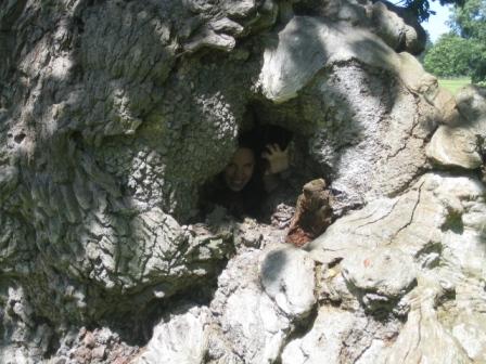 scary tree troll