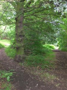 hobbit path