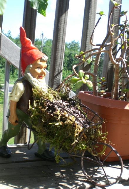 Gnome with wheel barrow